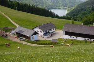Urlaub am Bauernhof - Lunz am See / Maiszinken - Moaserhof